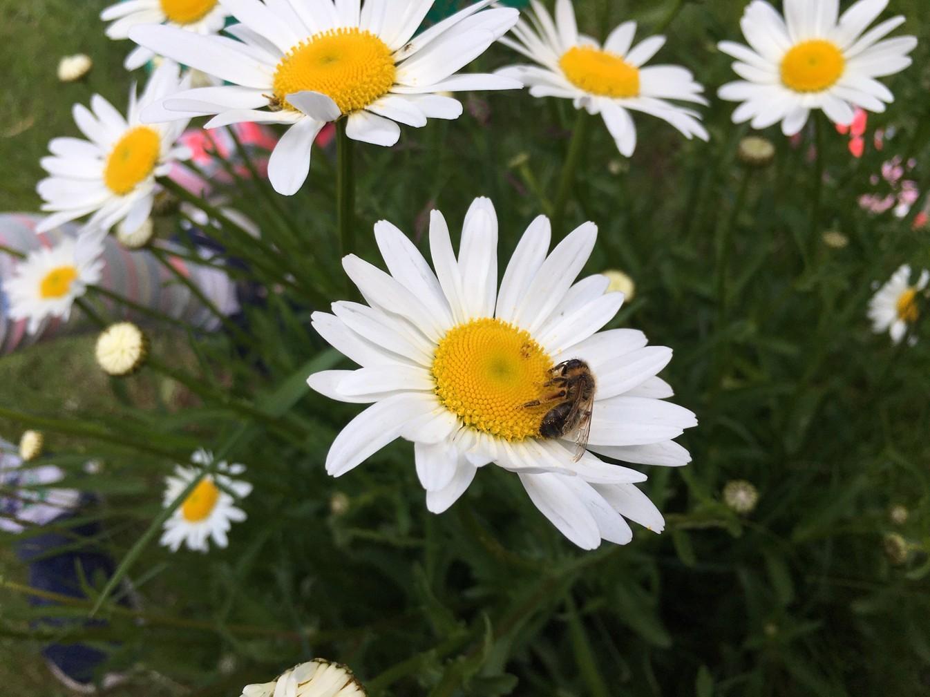 Sledovali jsme pilné včelky